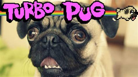 turbo pug anjingnya pewdiepie turbo pug indonesia gameplay