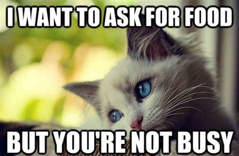 Cat Problems Meme - most funny first world problems cat meme 25 pics