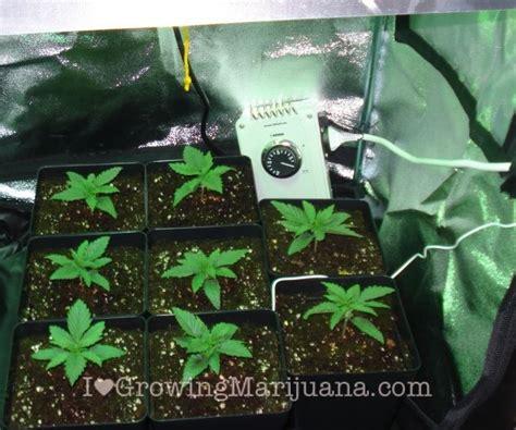cannabis room temperature create the best climate for marijuana grow room