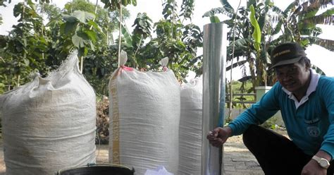 Sekam Kayu Bakar pembuatan sekam bakar husk charcoal humaira farm