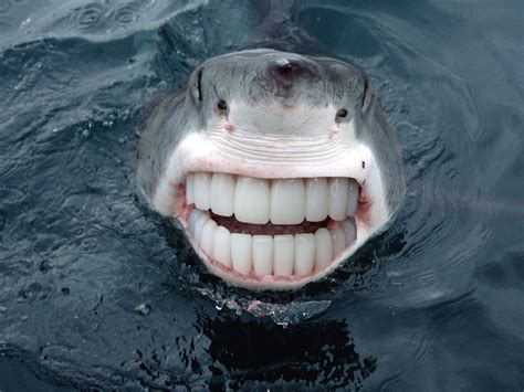 with teeth smiling animals with human teeth pictures to pin on pinsdaddy