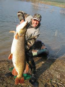 Esox lucius world s biggest pikes