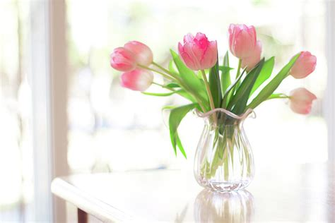 Pictures Of Tulips In Vases by Pin Pink Tulips Vase Arrangement On