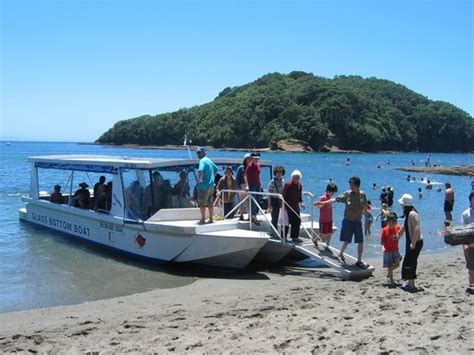 glass bottom boat reviews glass bottom boat leigh new zealand address phone
