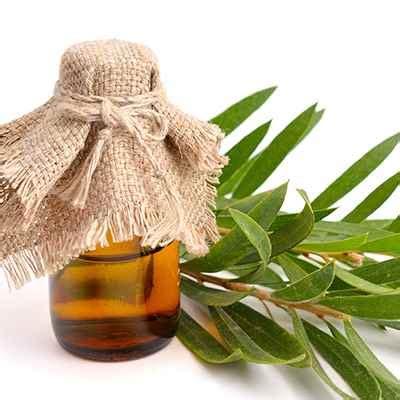 tea tree essential oil by shop vimaxbanyumas com agen