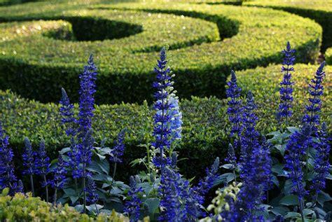 lavender maze lavender maze photograph by tim wintjen