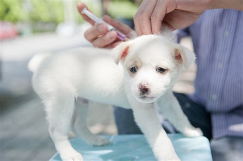 how many vaccinations do puppies need animal hospital nc compassionate care veterinary