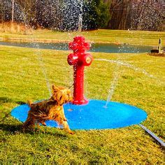puppy pad spray 1000 images about water park on splash pad fresh water and bones