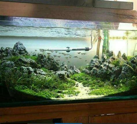 setup aquascape 17 best ideas about aquarium setup on pinterest aquarium
