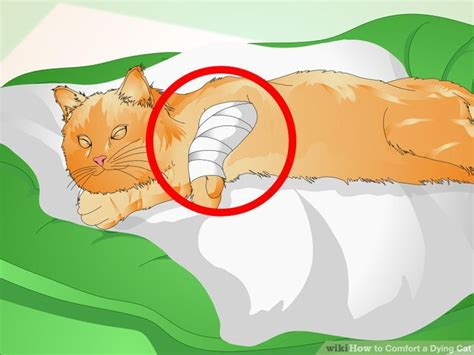 how to make a dying cat comfortable at home how to comfort a dying cat