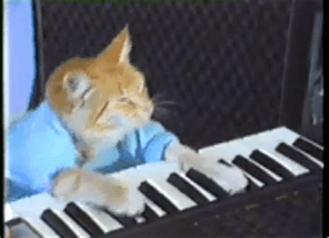 keyboard cat tutorial keyboard cat gifs find share on giphy