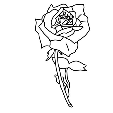 roses coloring pages rose pictures