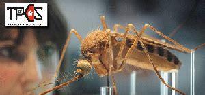 total pest control services  fumigation services karachi
