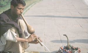 Decline Cobra Letter News World South Asia Snake Charmers Fight For Survival