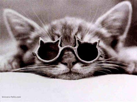 wallpaper hd chat lunette fond d 233 cran de chat un chat avec ses lunettes de chat