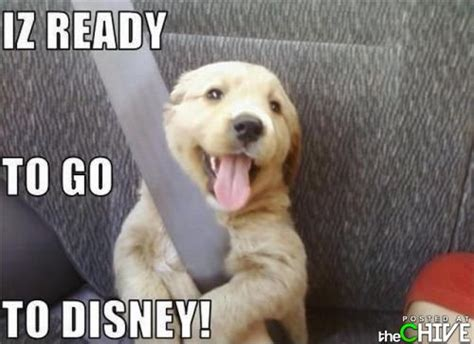 Cute Disney Memes - dogs with captions michael bradley time traveler