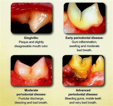 old cat disease pet dental health pet dentistry pet oral disease oral atp