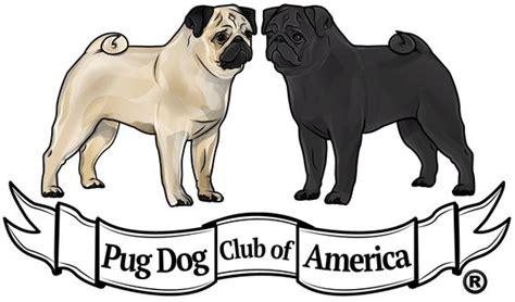 pug club of america pug club of america 187 illustrated standard pugs america pug and tips