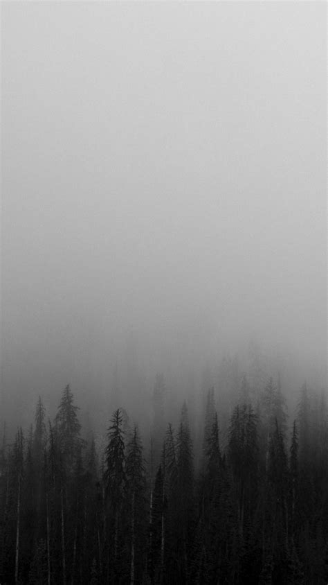Black-and-White-Mist-Forests-Wallpaper - iPhone Wallpapers