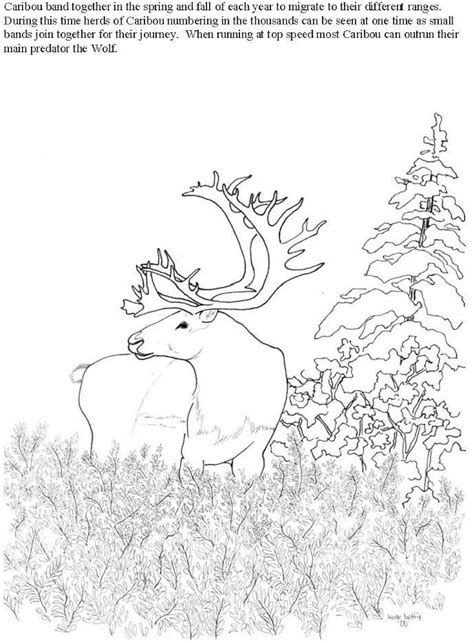 caribou coloring pages getcoloringpagescom