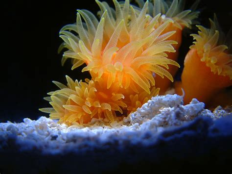 low light corals for hangs with tank update and