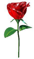 imagenes de rosas q brillan 薔薇のクリップアート 7 ルィのブログ luidaの酒場 yahoo ブログ