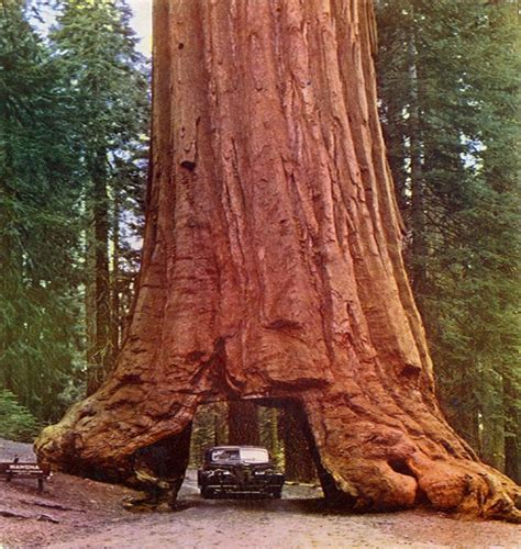 the wood for the trees one s view of nature books redwood northern california 1953 pixdaus