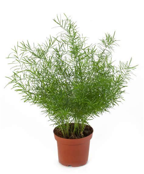 piante da appartamento nomi 79 eccellente piante grasse da appartamento home design