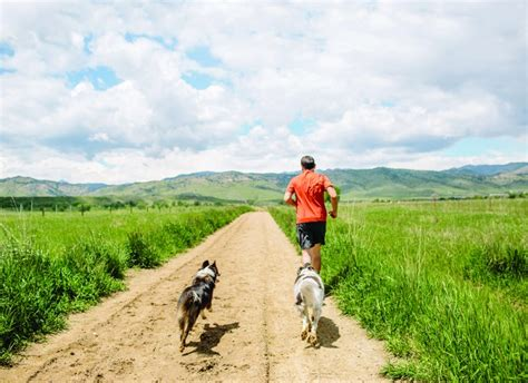 running with dogs four legged a guide to running with your competitor
