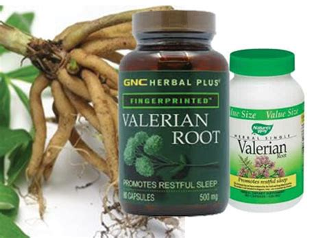 valerian root for dogs valerian root reviews extract tea for anxiety sleep dogs radiance valerian