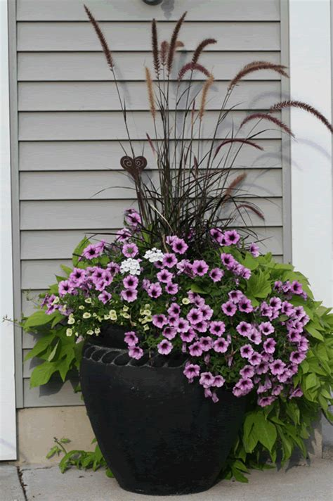 Ornamental Grasses For Planters by Grasses In Container Planters Gardening Landscaping