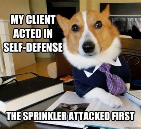 Corgi Lawyer Meme - the hilarious lawyer dog meme 20 pics izismile com