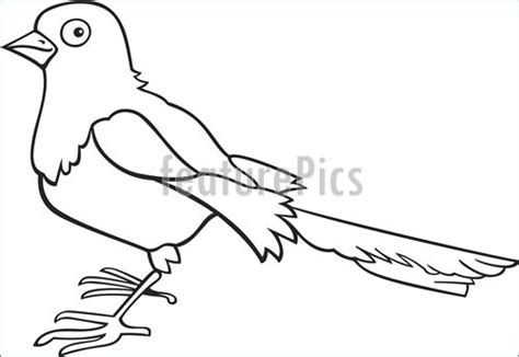 magpie bird coloring page wildlife magpie for coloring book stock illustration