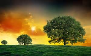 Landscape Pictures Of Trees Sunset Field Trees Landscape Clouds Wallpaper 1920x1200