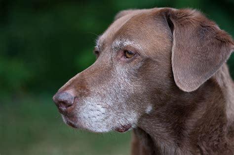 senior dogs no better time adopt a senior