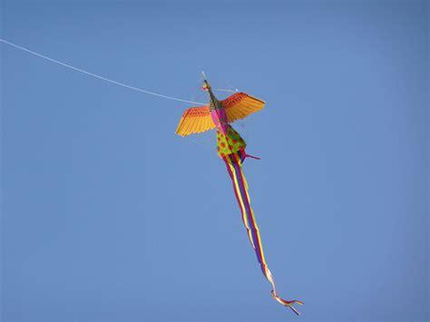 new year fish kite kite photos new years kite