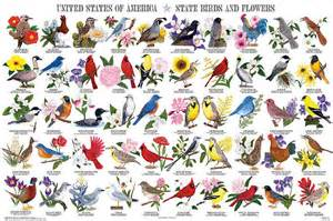 Backyard Birds Utah by State Birds And Flowers Beautiful Poster From Feenixx