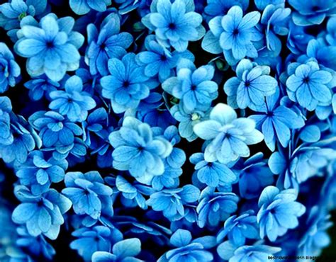 flower photography blue flower photography 1280x1024 best hd