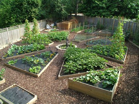 vegetable gardening in colorado vegetable gardening in colorado vegetable gardening in