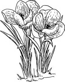 Outline Sketches Of Flowers by Outline Drawing Flower Flowers Plant Domain Pictures Free Pictures