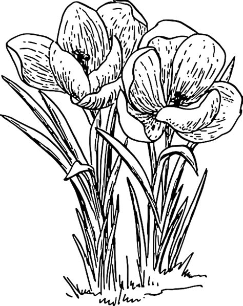 Flower Outline Drawing