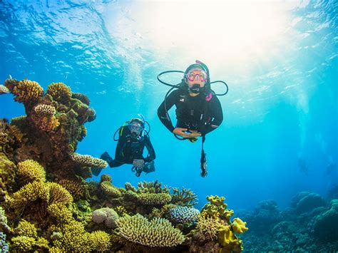 pro dive cairns pro dive cairns great barrier reef scuba diving and