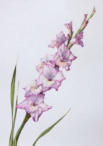 gladiolus flower tattoo watercolor gladiolus search tattoos i