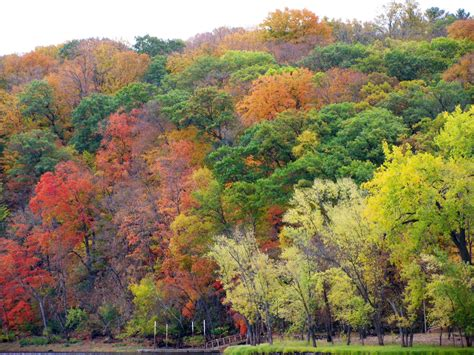 mn dnr fall colors dnr fall color finder map goes live for season wcco