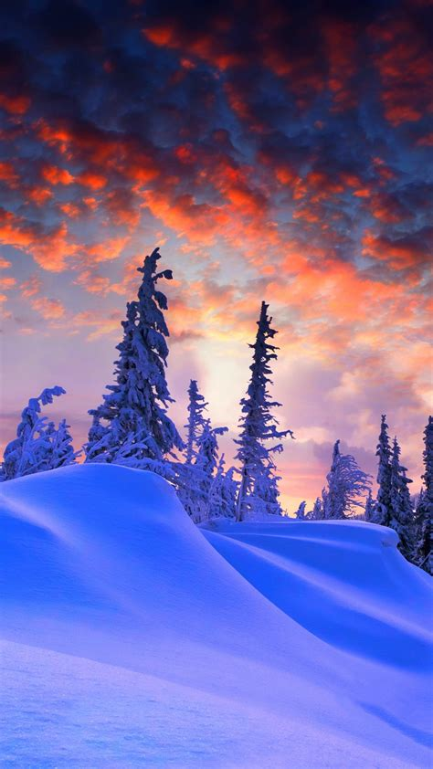 wallpaper winter pine trees snow covered sunset  nature  popular