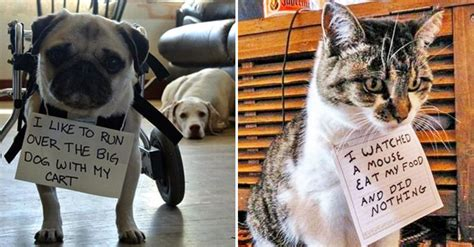 naughtiest dogs  cats confessing  dirty crimes