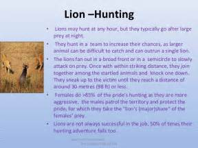 All about lions 30 fun interesting facts for kids ppt