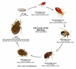 pest management bed bug recognition and treatment