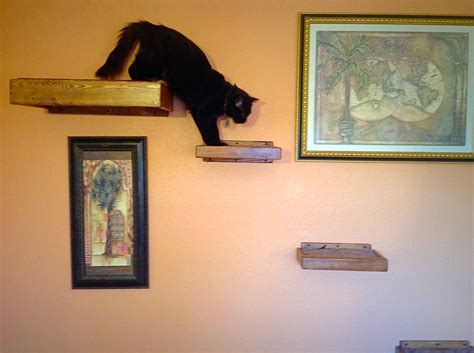 set of five four floating cat shelves one floating cat bed