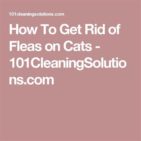 how to get rid of fleas how to get rid of fleas on cats 101cleaningsolutions